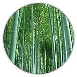 Riesenbambus - 20 Samen - schnelles Wachstum - winterharte Pflanze - Gartenpflanze