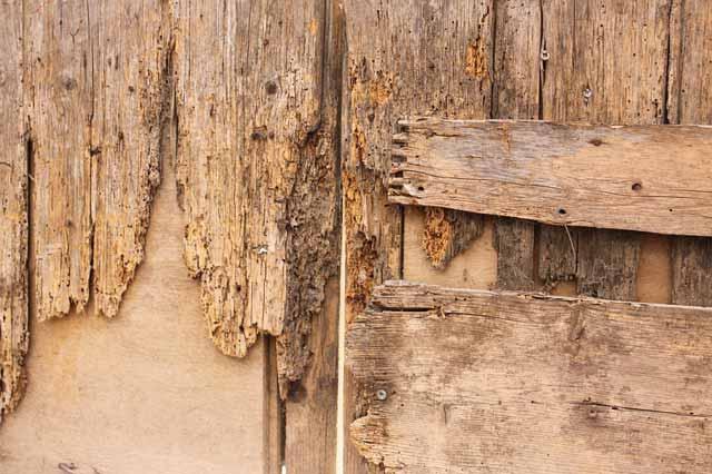 Holz mit Holzwurm